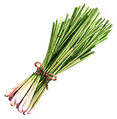 Illustration of Lemongrass